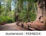 California Coastal Redwood...