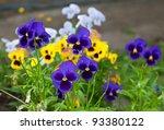 violas or pansies closeup in a... | Shutterstock . vector #93380122