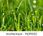morning dew drops on the green... | Shutterstock . vector #9339052