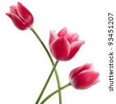 Stock photo three fine flowers isolated on white 93451207