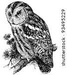 bird tawny owl | Shutterstock .eps vector #93495229