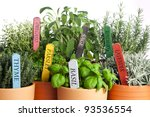 seven kinds of potted garden... | Shutterstock . vector #93536554