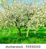 Beautiful Floral Apple Trees...