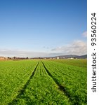 Green agricultural field with tracks of a tractor - stock photo
