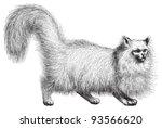Angora Cat  Felis Domestica...