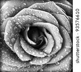 Stock photo black and white rose background grunge abstract floral natural pattern fresh flower with water 93576610