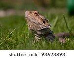 bearded dragon in grass   Shutterstock . vector #93623893