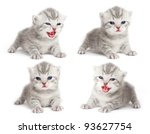 Stock photo the british kitten 93627754