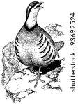 Bird Chukar Partridge