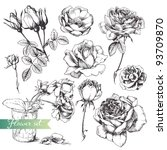 Stock vector flower set highly detailed hand drawn roses 93709870