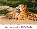 Mother's Love    Tigress And...