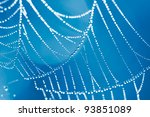 The Spider Web close up. Blue color tone. - stock photo