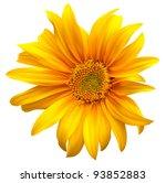 Stock vector sunflower vector flower 93852883