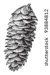 white spruce  picea alba   ... | Shutterstock .eps vector #93884812