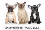 Stock photo burmese cat and two french bulldog puppies sits on a white background 93891661