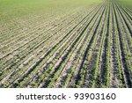 soybean field rows in spring | Shutterstock . vector #93903160