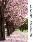 Cherry Blossom Trees Garden