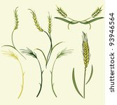 wheat illustration  vector | Shutterstock .eps vector #93946564