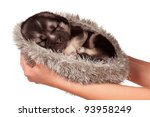 Cute sleeping puppy of 3 weeks old on a white background - stock photo
