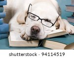 Stock photo intelligent dog 94114519