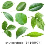collection of garden leaves on... | Shutterstock . vector #94145974