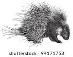 Crested Porcupine (Hystrix cristata) / vintage illustration from Meyers Konversations-Lexikon 1897