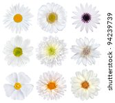 Stock photo various selection of white flowers isolated on white background set of nine daisy gerber 94239739