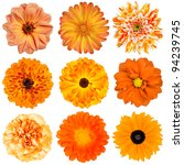 Stock photo selection of various orange flowers isolated on white background dahlia daisy chrysanthemum pot 94239745