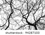 Tree Branches Isolated On Whit...