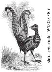 lyrebird   vintage illustration ... | Shutterstock .eps vector #94307785