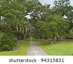 """Giant Oaks Brookgreen Park"" The giant oaks of Brookgreen Gardens near Myrtle Beach in South Carolina. - stock photo"