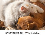 Stock photo a small cat and a small dog sleeping together as good friends 94376662