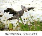 Wild Shoebill In Natiral...
