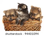 Stock photo  puppies and kittens 94401094