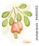 Apples with nuts cashew. Watercolor style. Vector illustration.