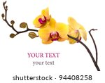 Yellow Orchid Flower Isolated...