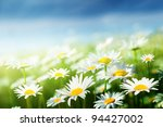 field of daisy flowers | Shutterstock . vector #94427002