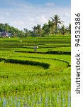 A worker in a rice terrace - Bali - stock photo