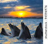 the bottle nosed dolphins in... | Shutterstock . vector #94596976