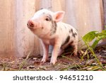 Stock photo close up of a cute muddy piglet running around outdoors on the farm ideal image for organic farming 94651210