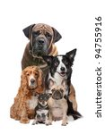 Stock photo five dogs in front of a white background 94755916
