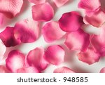scattered rose petals - stock photo