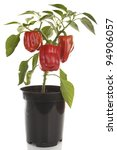 Sweet Peppers Plant Isolated...