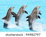 A Group Of Bottlenose Dolphins...