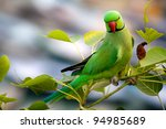 Perching Green Parrot Over The...