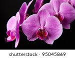 purple orchid with black... | Shutterstock . vector #95045869