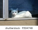 Cat in window - stock photo