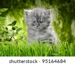 Stock photo small british kitten the age of month in the grass 95164684