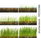 growing grass in six stages | Shutterstock . vector #95252086