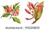 Left Bougainvillea Spectabilis...